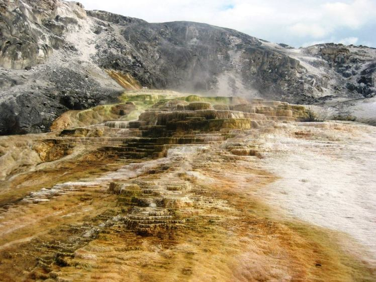 One of the terraces at Mammoth Hot Springs