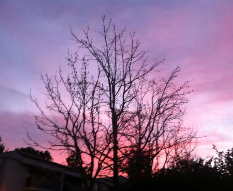 Purple Sky