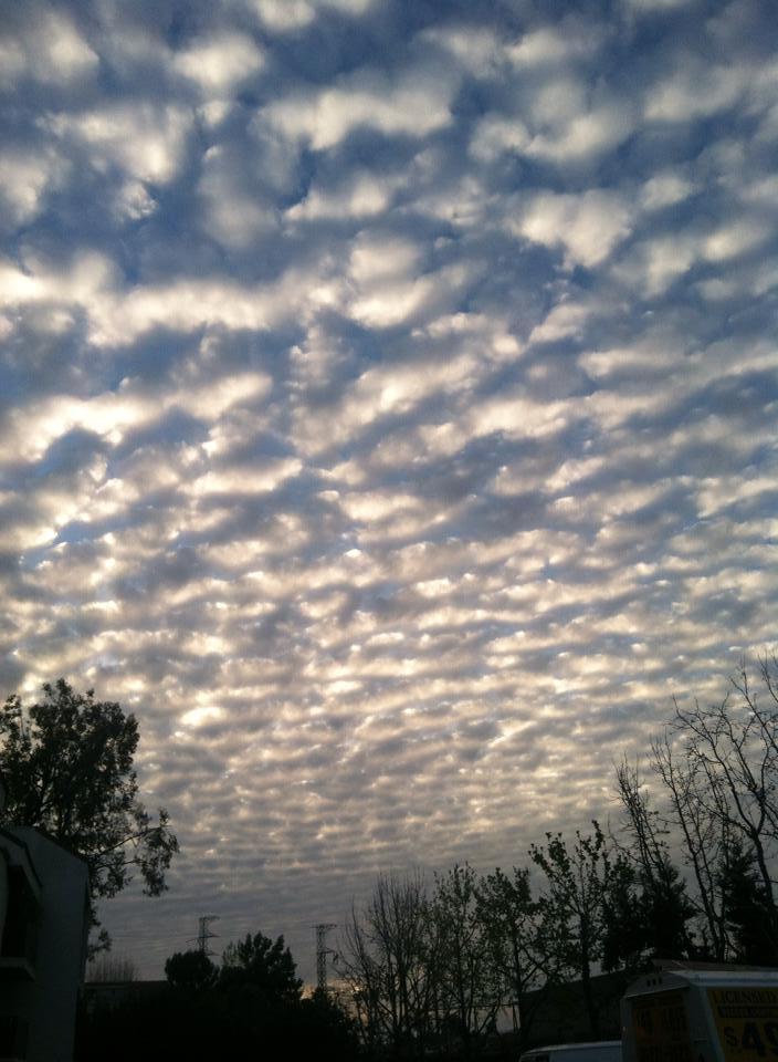 Shimmering Skies